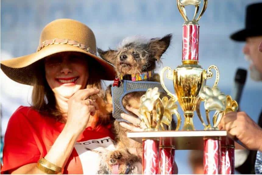 Uma Tradição Da Internet Concurso Nos Eua Nomeia O Cão Mais