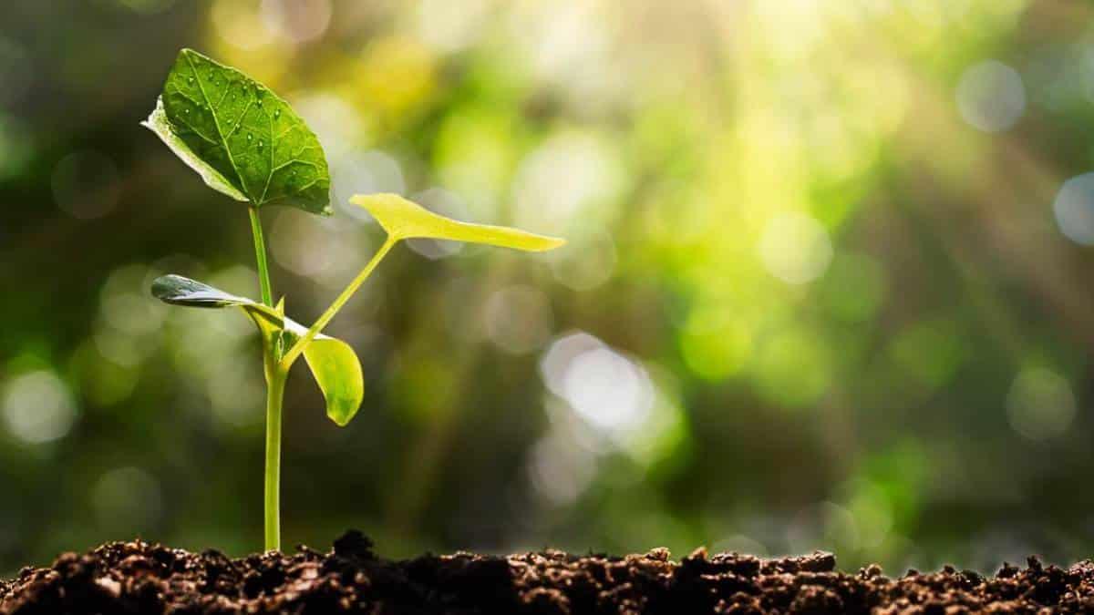 Natureza, aquecimento global, árvore