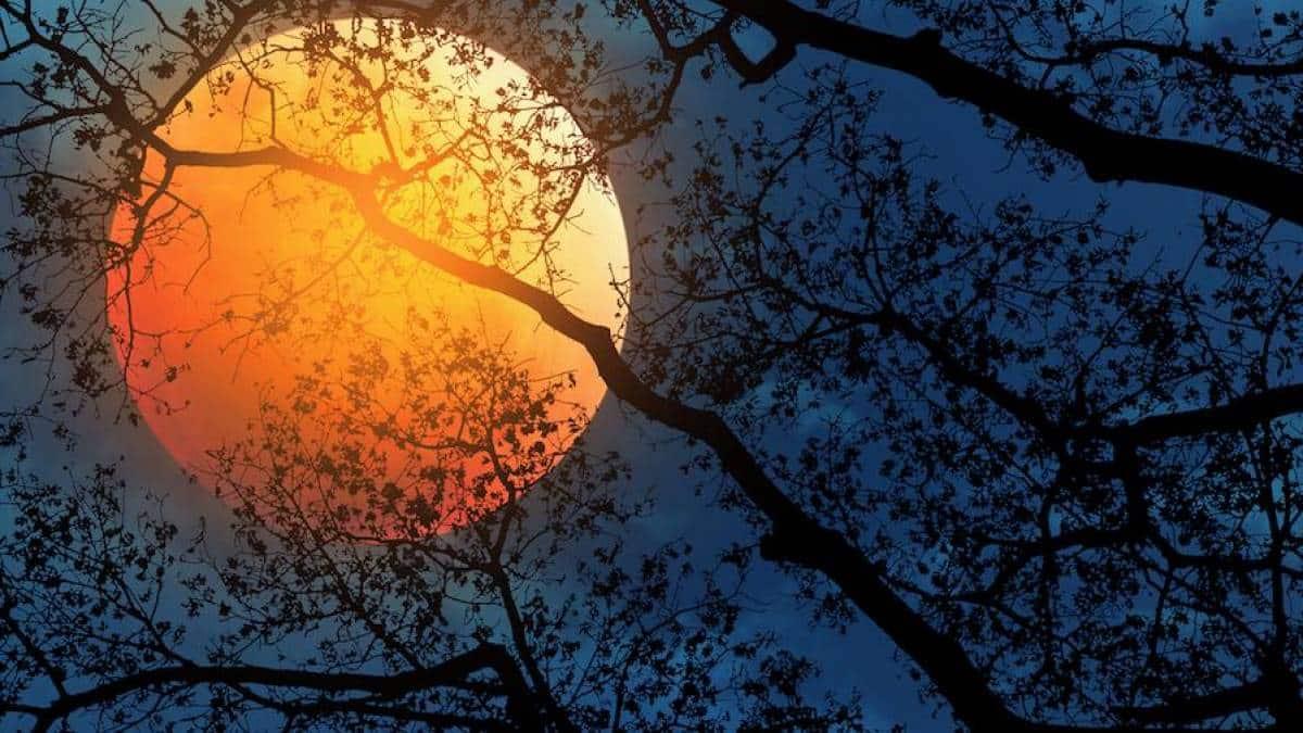 Lua Laranja - Lua do Caçador