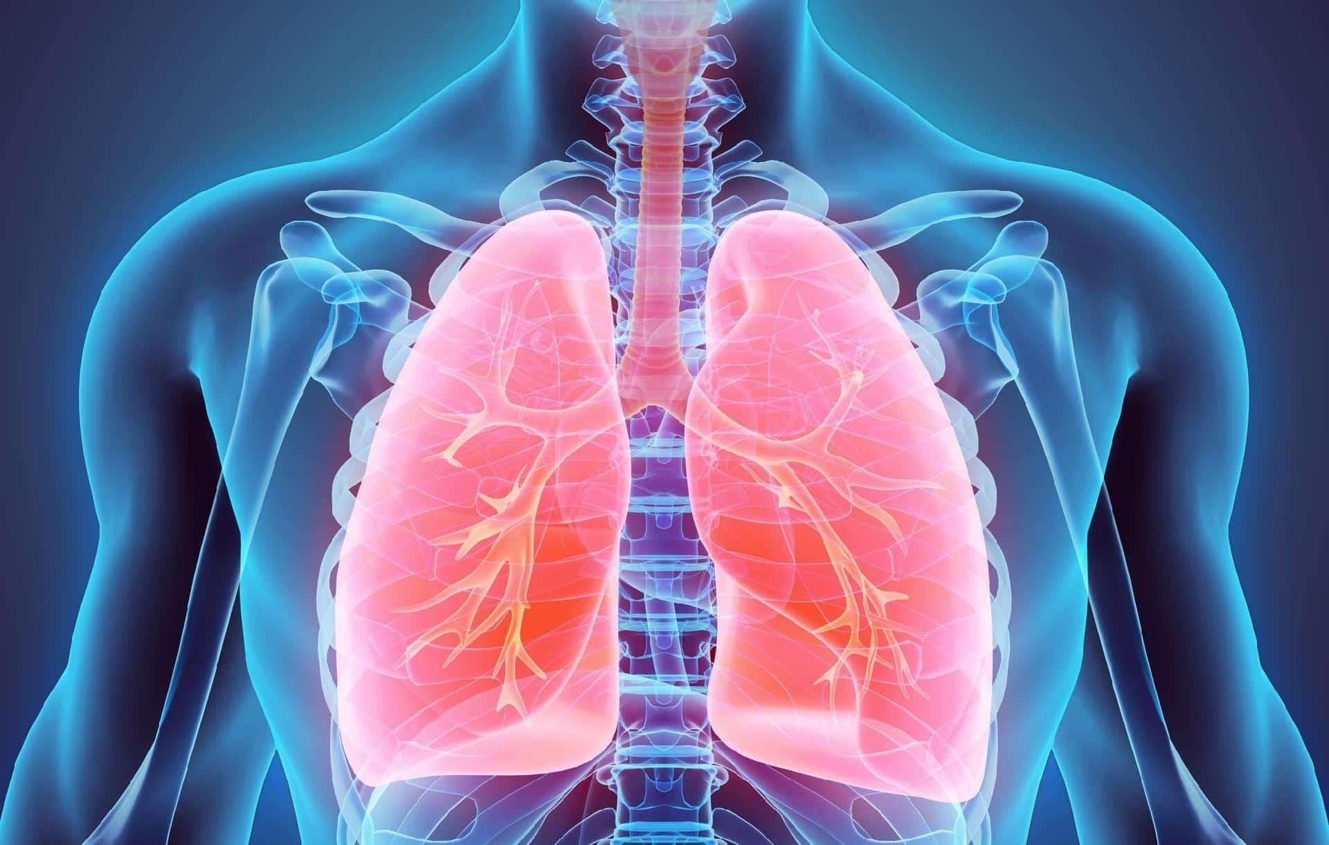 Sistema circulatório de porcos reparam pulmões humanos danificados, diz experimento