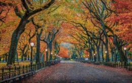 Político de Nova York propõe criar e-mail para 200 árvores da cidade