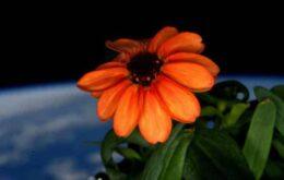 Veja a primeira flor a crescer no espaço
