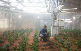 Pesquisadores indicam que é possível plantar batatas em Marte