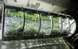 Nasa testa estufas infláveis para alimentar astronautas em Marte