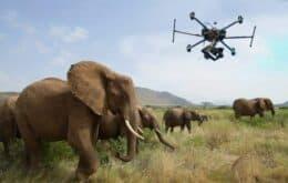 Drones são utilizados para proteger elefantes de caçadores