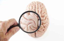Cientistas podem ter encontrado área do cérebro onde vive o estresse