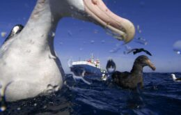 'Police' birds find illegal fishing vessels