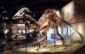 Doença de dinossauro atinge humanos