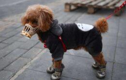 Cachorro é diagnosticado com coronavírus em Hong Kong