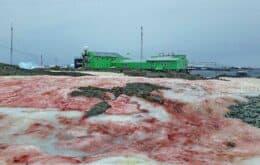 'Neve de sangue' na Antártica denuncia o desequilíbrio ambiental