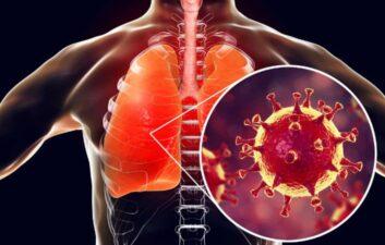Investigadores australianos mapean la respuesta inmune al coronavirus