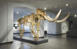 Smithsonian promove tour virtual de exposição em homenagem a Humboldt