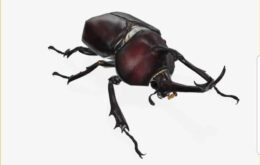 Google adds scary insects to augmented reality tool
