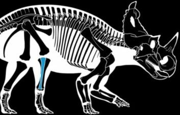 Malignant cancer first discovered in dinosaur bone
