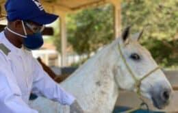 Soro produzido por cavalos é 100 vezes mais potente no combate à Covid
