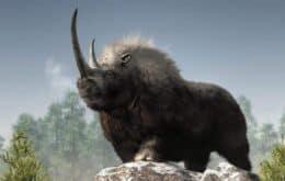 Onda de calor causou a extinção do rinoceronte-lanudo, não a caça