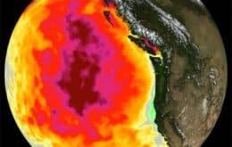 Aquecimento global eleva risco de ondas de calor marinhas, diz estudo