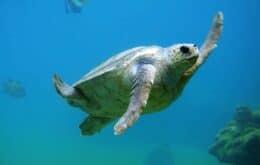 Ovos de tartaruga 'falsos' expuseram comércio ilegal na Costa Rica
