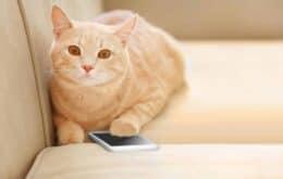 Aplicativo MeowTalk promete traduzir sons de gatos no Android e iOS