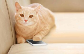 Aplicativo MeowTalk promete traduzir sons de gatos no Android e iOS