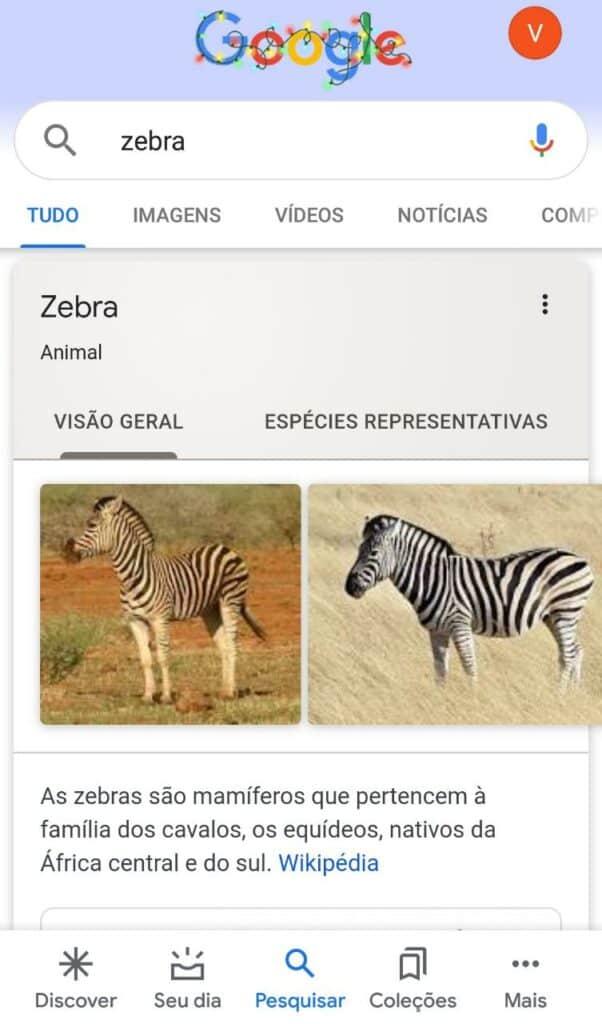animais em busca no google