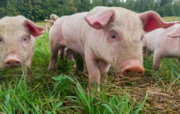 China expands alert after new cases of swine fever