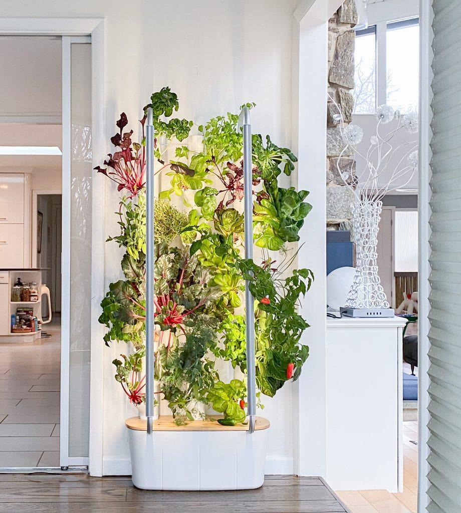 Technological garden allows you to grow vegetables at home