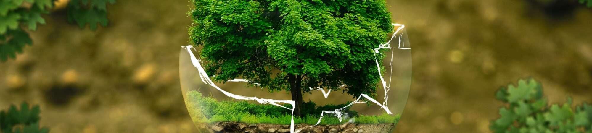 Imagem de árvores