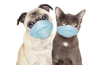 Covid-19: USA is close to having vaccine for pets