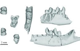 New fossils help us understand the life of the first primates