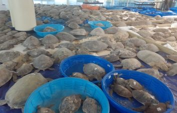 SpaceX team helps save turtles from the cold in Texas