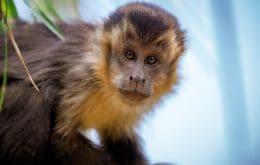 Células humanas injetadas em embriões de macacos podem ajudar no tratamento de doenças
