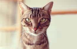 """Como usar o """"filtro do gato"""" em chamadas de vídeo"""