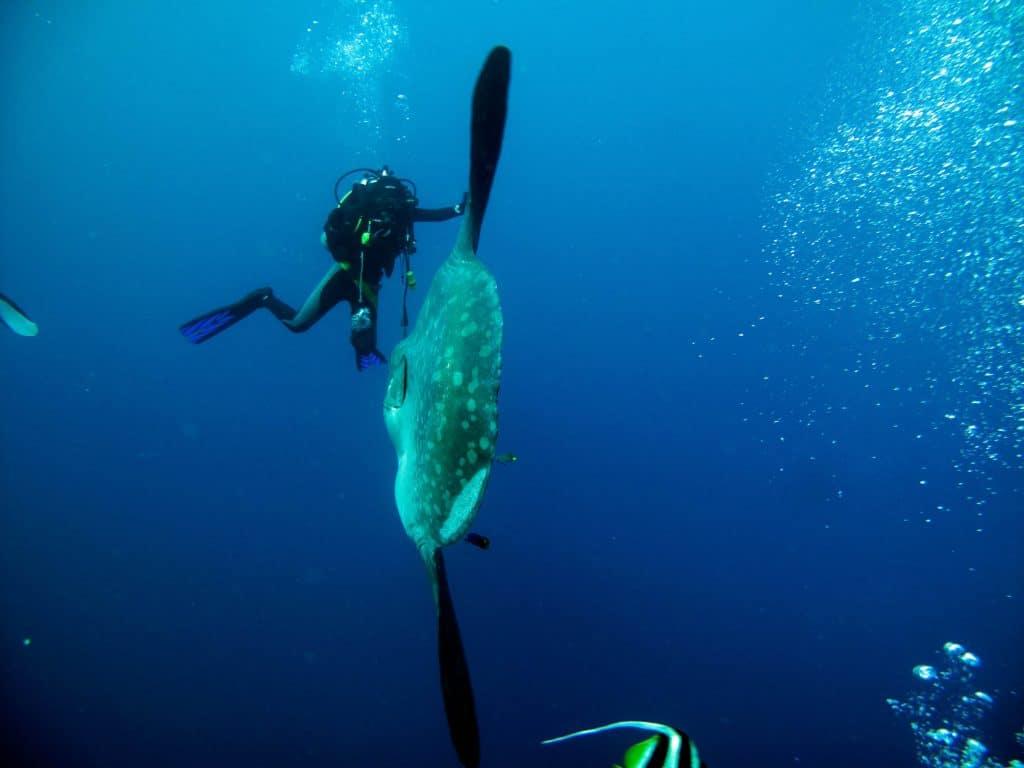 Maior peixe ósseo aparece morto em praia de Fortaleza. Imagem: Shutterstock