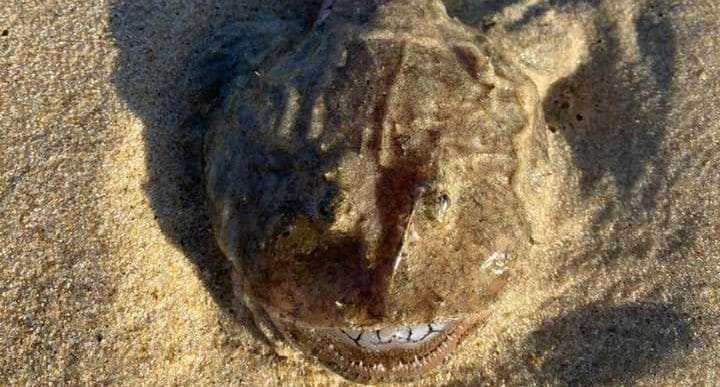Photo of a mysterious fish