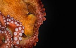 Sono dos polvos é semelhante ao de humanos, diz estudo