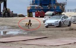 SpaceX: Cão-robô investiga destroços da explosão da Starship SN10