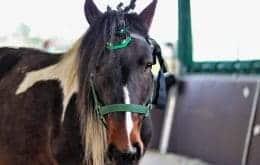 Cientistas conseguem 'ler' cérebro de cavalos para identificar emoções
