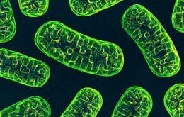 Descoberta na Suíça ajuda a entender a origem das mitocôndrias