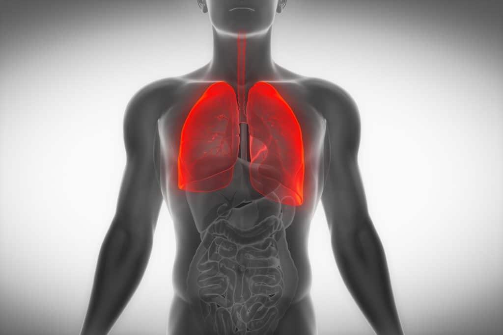 Ilustração de corpo humano com destaque nos pulmões