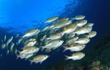 Warning: air pollution harms fish hearing