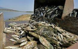 Toneladas de peixes aparecem mortos em lago no Líbano