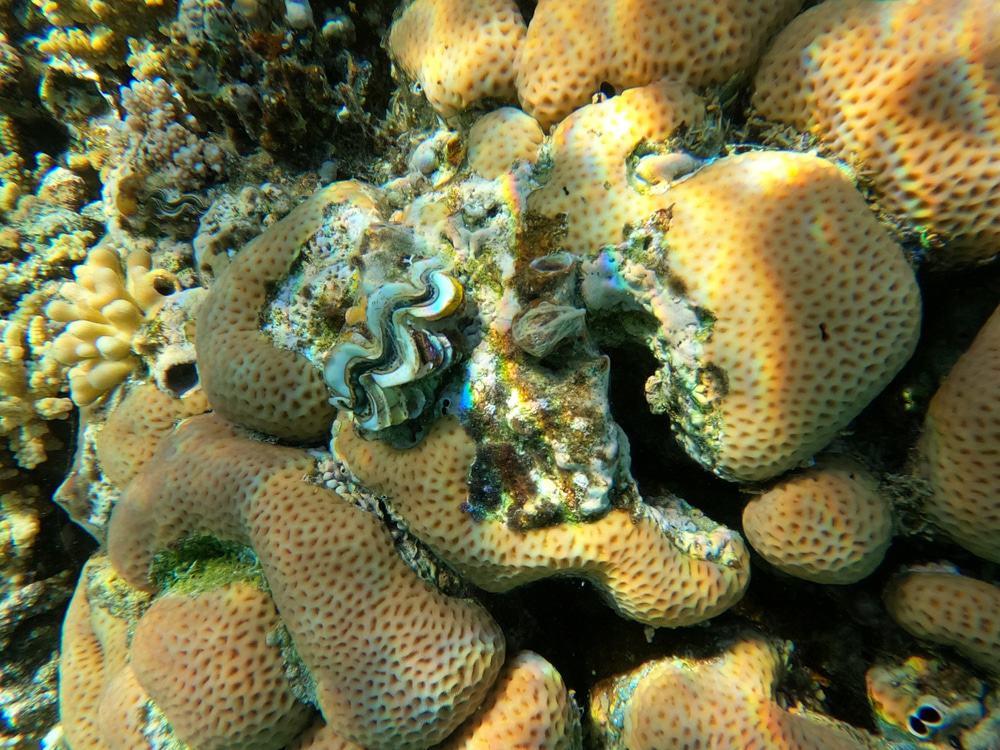 Esponjas marinhas