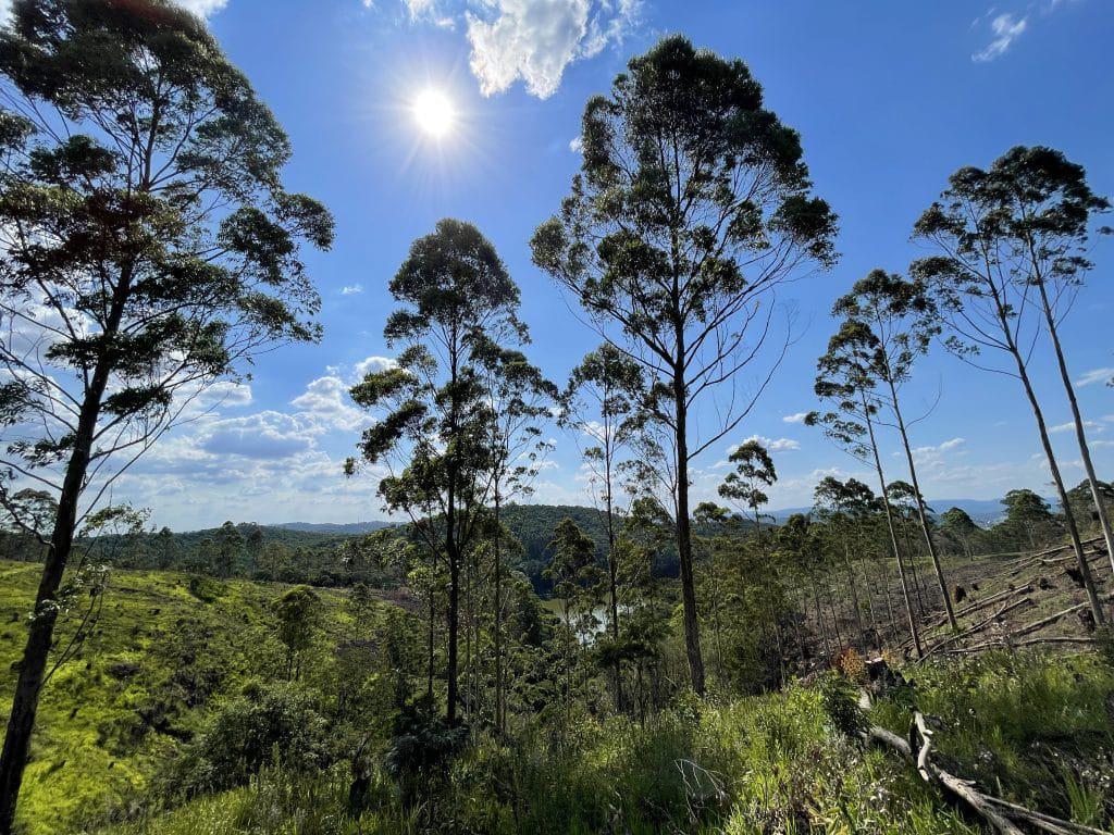 Fotografia feita contra o sol com o iPhone 12. Imagem: Wellington Arruda/Olhar Digital