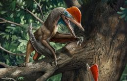 Monkeydactyl: Universidade brasileira investiga réptil voador que pode ter escalado árvores