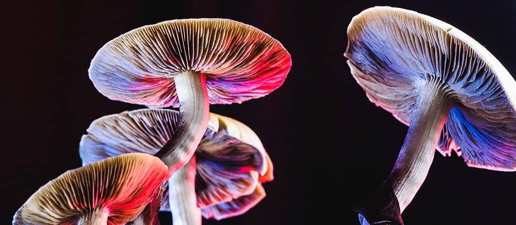 Magic-Mushrooms-1030x450