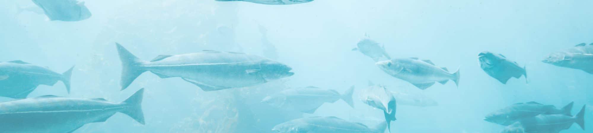 Peixes-2000x450