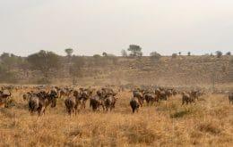 Apenas 3% das terras do nosso planeta não foram estragadas por humanos, diz estudo