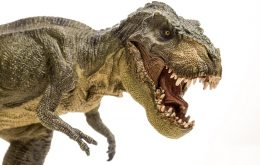Tyrannosaurs were sociable animals resembling wolves, says study