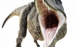 Tyrannosaurus-like dinosaur species discovered in Argentina